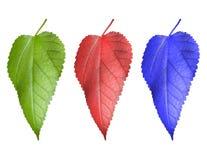 Multi-coloured blad drie royalty-vrije stock afbeeldingen