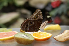 Multi-coloured bright butterfly Royalty Free Stock Photo