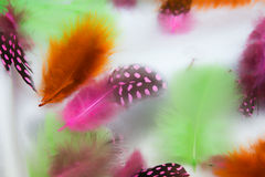 Multi-coloured feathers. On white silk stock images