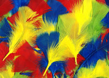 Multi coloured feathers background. Multi coloured fluffy and soft bird feathers abstract background royalty free stock image