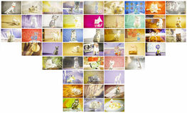 Multi-coloured figurines of cats collected in one shot. Royalty Free Stock Photos