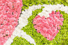 Multi-coloured of flower Stock Photography