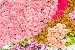 Multi-coloured of flower Stock Image