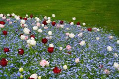 Multi coloured flower bed. Surrounded by grass, with red and pink tulips and tiny blue flowers Stock Image