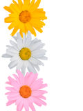 Multi-coloured flowers Royalty Free Stock Images
