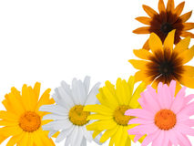 Multi-coloured flowers Royalty Free Stock Photos