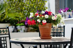Multi coloured garden flowers in pot outdoors. Multi coloured garden flowers in ceramic pot on table outdoors, sunny day no people stock photo