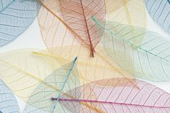 Multi coloured leaf background. Multi coloured skeleton leaf background Royalty Free Stock Photos