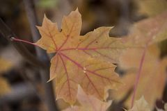 Multi Coloured leaf with nice details stock images