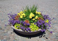Multi-coloured leafed plants. In city royalty free stock images