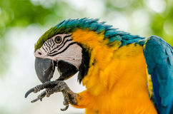 Multi Coloured Macaw Royalty Free Stock Images