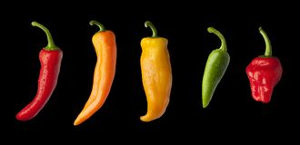 Multi-coloured Peppers in-a-row on a black background Stock Images