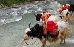 Multi-coloured Ponds. China's natural landscape in guizhou stock images