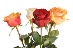 Multi-coloured roses. Cost vertically Royalty Free Stock Photos