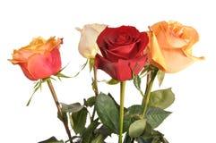Multi-coloured rozen Royalty-vrije Stock Foto's