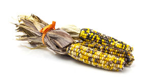 Multi Coloured Sweet Corn Cobs Stock Photo