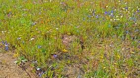 Multi-coloured wildflowers royalty-vrije stock fotografie