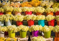 Multi cubetas coloridas engraçadas com narcisos amarelos amarelos Foto de Stock Royalty Free