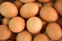 Multi Eggs Stock Image
