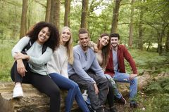 Multi ethnic group of five young adult friends taking a break sitting on a fallen tree in a forest during a hike, portrait royalty free stock images
