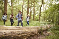 Multi ethnic group of five young adult friends walking in a forest during a hike stock photo