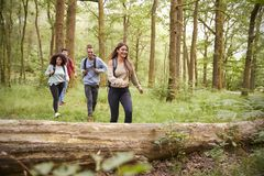 Multi ethnic group of four young adult friends walking in a forest during a hike, front view royalty free stock photo