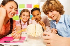 Multi ethnic students studying anatomy at class. Four multi ethnic students studying the anatomy with cerebrum model at the classroom royalty free stock photo