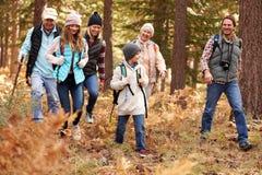 Multi famiglia che fa un'escursione in una foresta, California, U.S.A. della generazione immagine stock libera da diritti