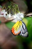 Multi Farbe auf Schmetterling Lizenzfreie Stockfotos