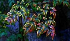 Multi Farbe lässt Muster Lizenzfreie Stockbilder