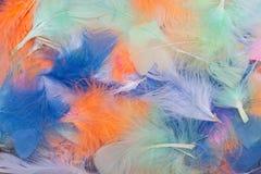 Multi farbige Vogelfedern Stockfoto