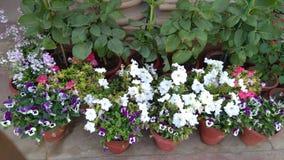 Multi fiore di colore fotografie stock libere da diritti