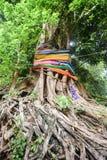 Multi fitas coloridas envolvidas em torno de uma árvore sagrado em um templo budista tailandês Imagem de Stock Royalty Free