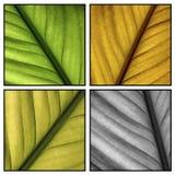 Multi folhas da cor Fotos de Stock Royalty Free