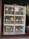 Multi gabbia per uccelli del piano Fotografie Stock Libere da Diritti