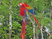 Multi gekleurd tropisch park Stock Fotografie