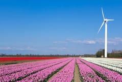 Multi gekleurd tulpengebied met een windmolen Stock Foto's