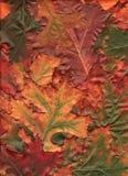 Multi Gekleurde Eiken Bladeren Stock Afbeeldingen