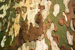 Multi gekleurde schors van een boom openlucht Stock Afbeeldingen