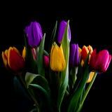Multi gekleurde Tulpen Stock Foto's