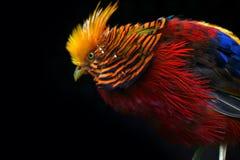 Multi Gekleurde Vogel Royalty-vrije Stock Foto's