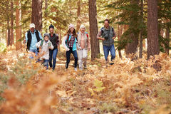 Multi generation family hiking in a forest, foreground space Stock Photos