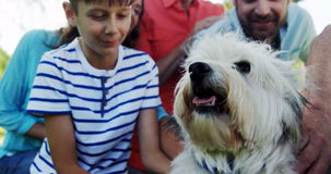 Multi-generation family playing with their dog stock video footage