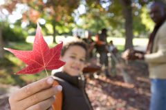 Multi-generational family collecting autumn leaves in garden, focus on boy (7-9) holding red maple leaf in foreground Stock Images
