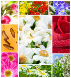 Multi image Flowers Royalty Free Stock Images