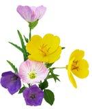 Multi kleurenSleutelbloem Stock Fotografie