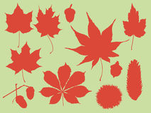 Multi leaves autumn Royalty Free Stock Images