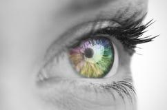 Multi olho colorido na cara cinzenta Foto de Stock