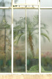 Multi pane window of greenhouse. Multi pane window of vintage greenhouse with blurred palm tree behind it royalty free stock photography