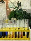 Multi provette colorate in una classe biologica immagine stock